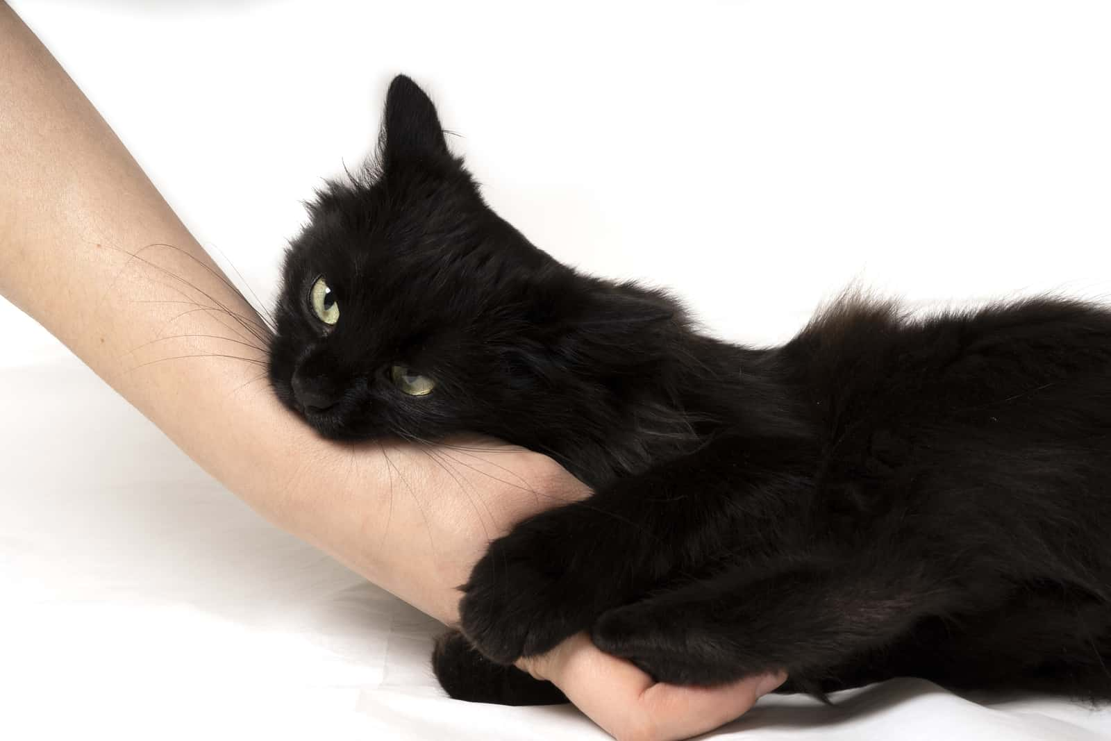 why does my cat bite me when I pet them?