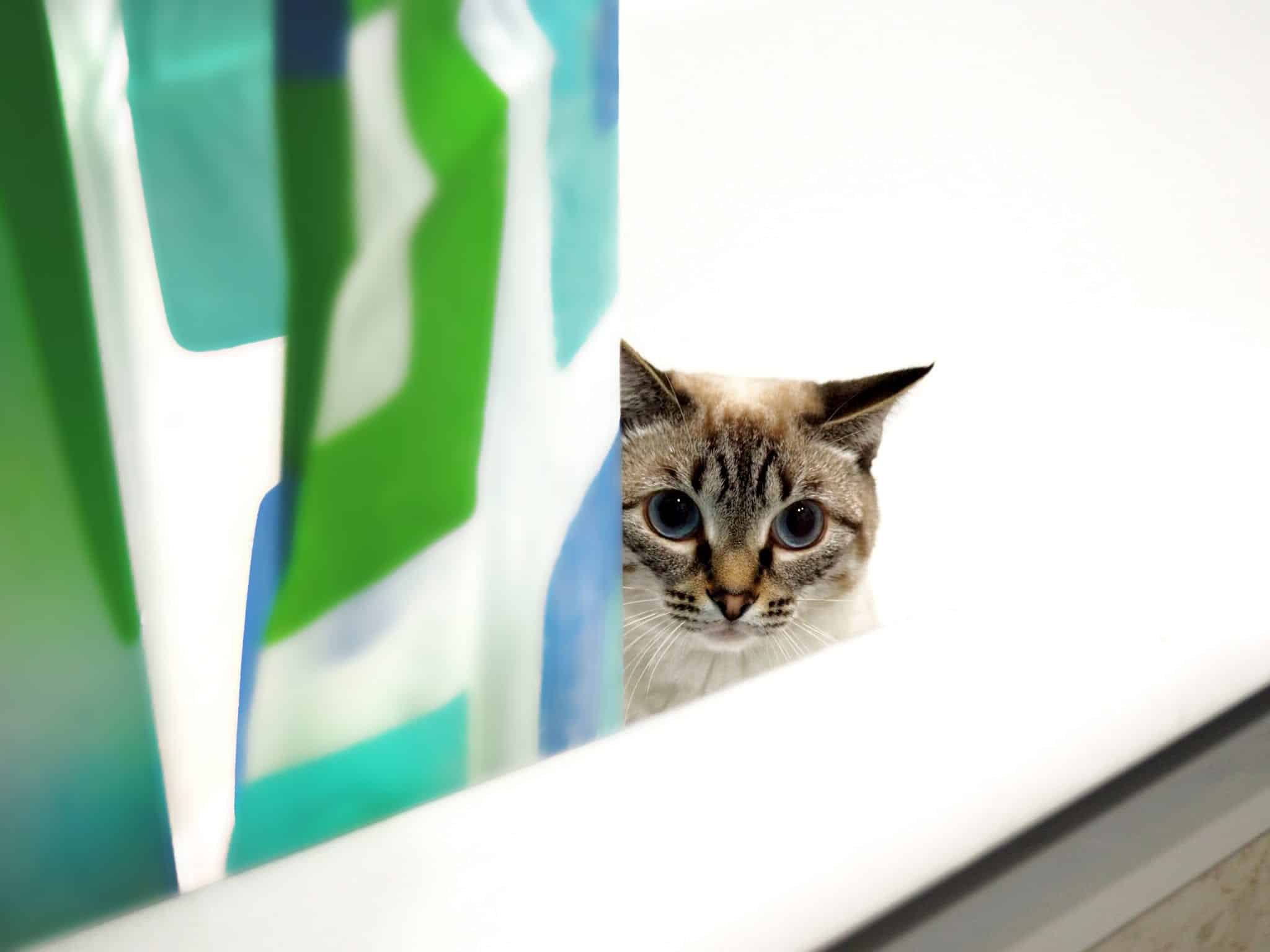 Do I need to give my cat a bath?