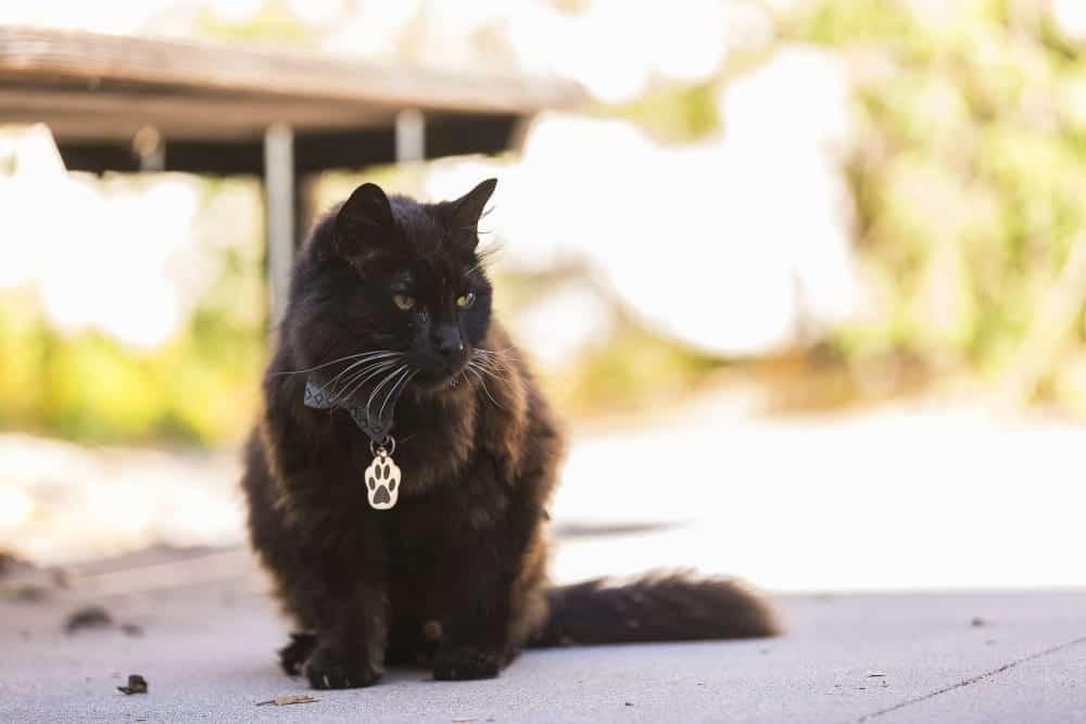 campus cat