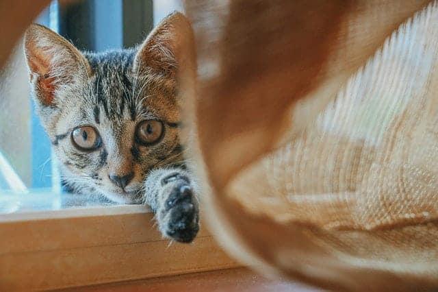 cat is moody