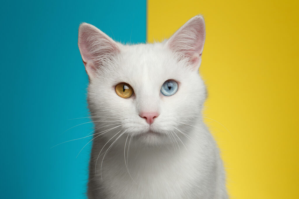 facts about white cats