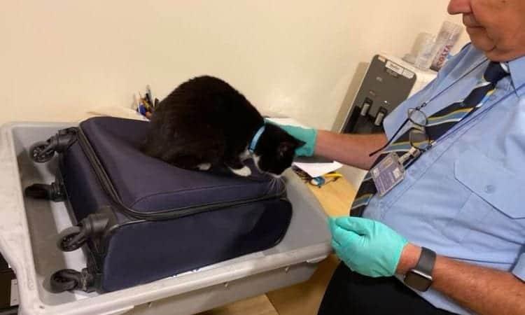 stowaway cat