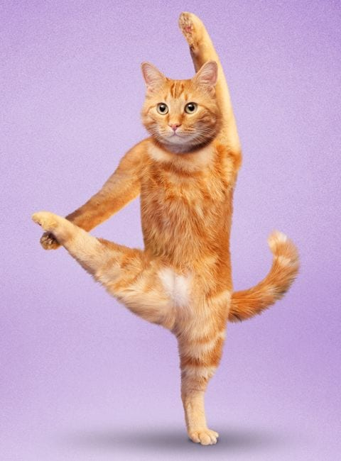 why cats stretch