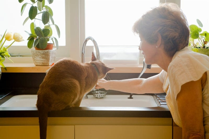 people love cats more than humans