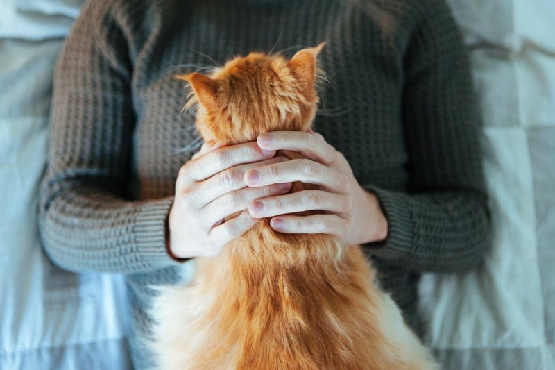 cats and mental health