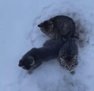 kittens rescue