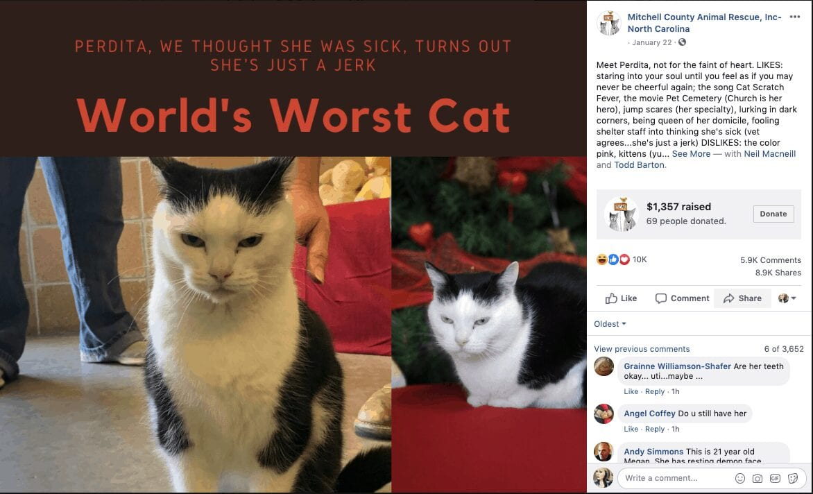 world's worst cat