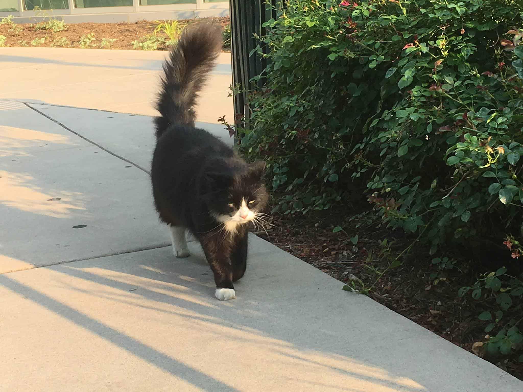 feral cat wonk cat