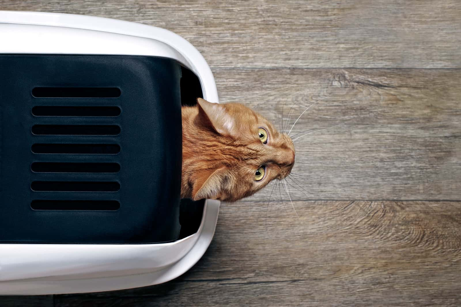 tips for masking the cat smell in your home