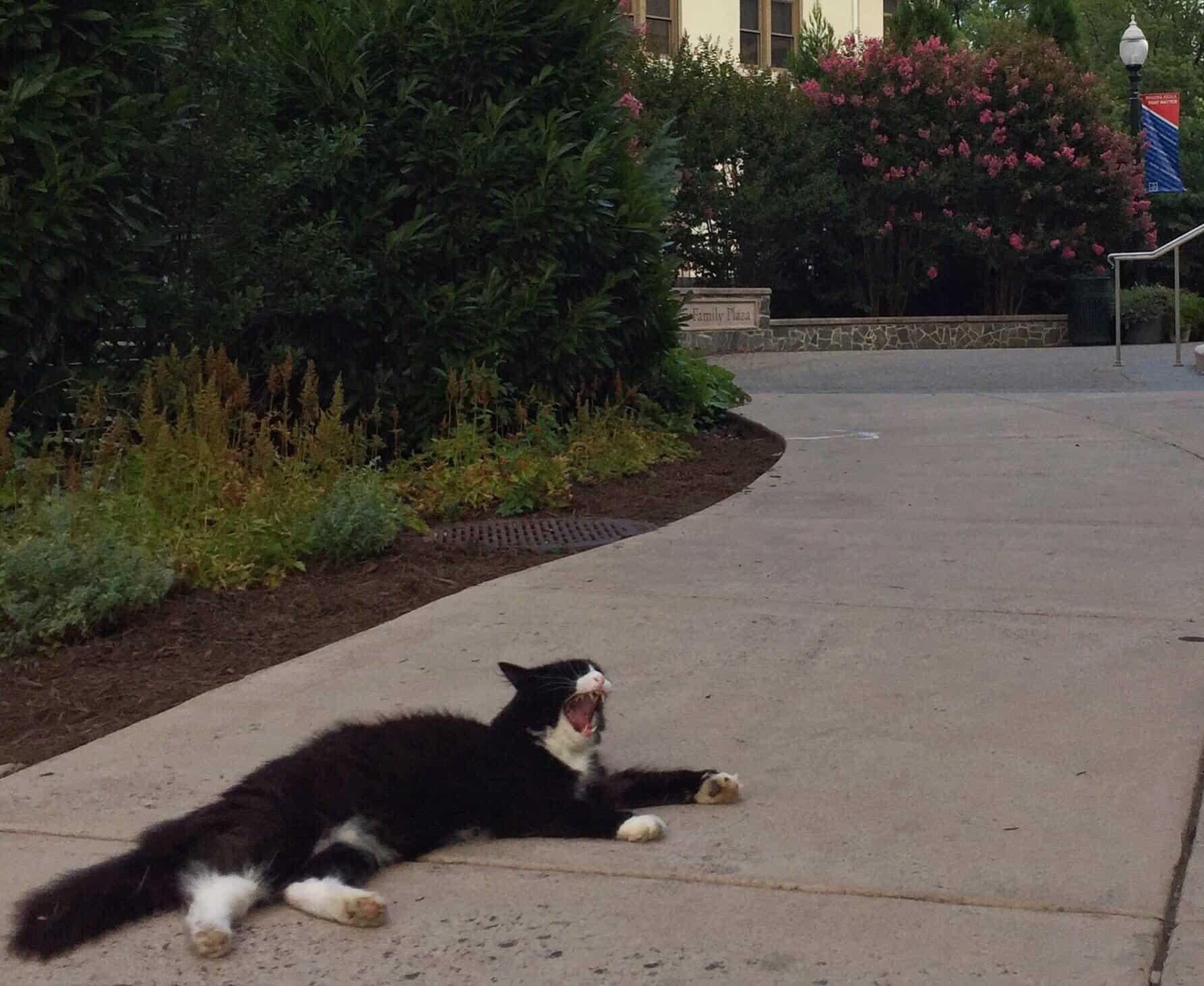 the wonk cat