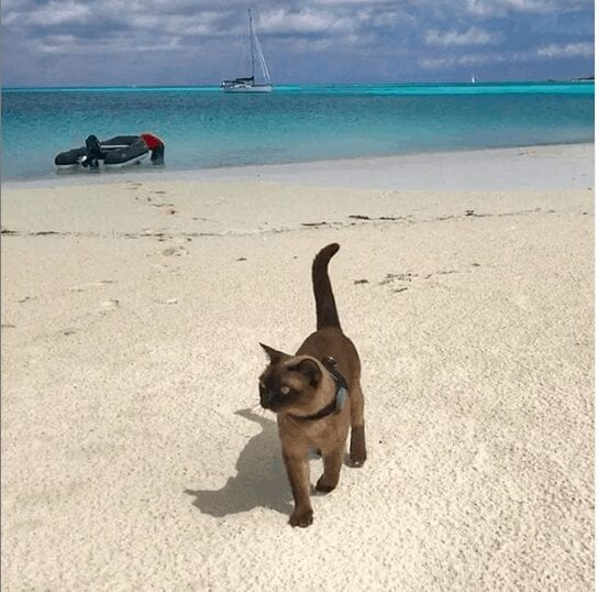 Miss Rigby The Boat Kitty