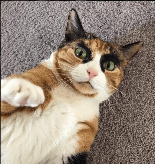 Lilly Crazy Eyes