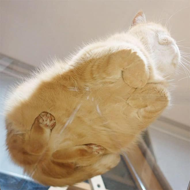 cats and glass tables