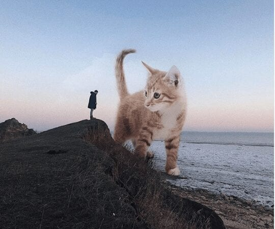 giant cats
