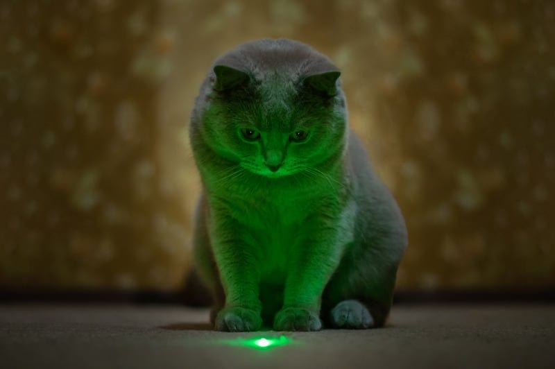 why do cats chase laser pointers?
