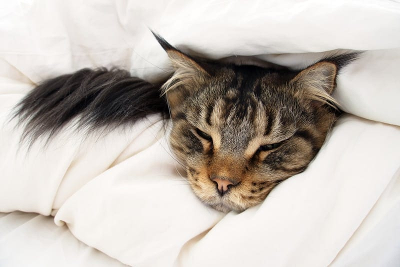 why do cats go away to die?
