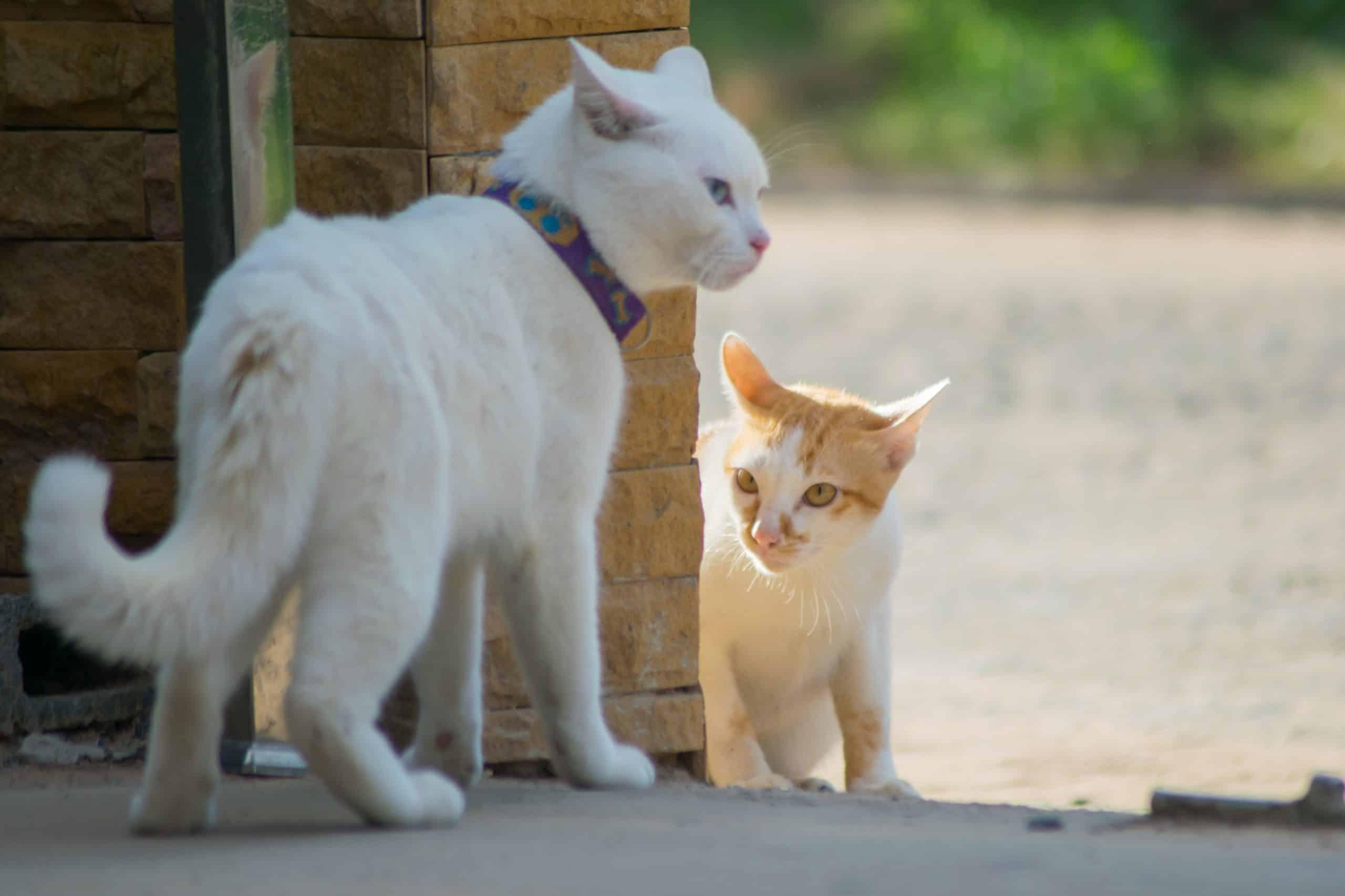 cats make eye contact