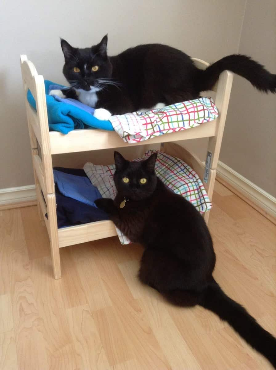 doll bed for cats