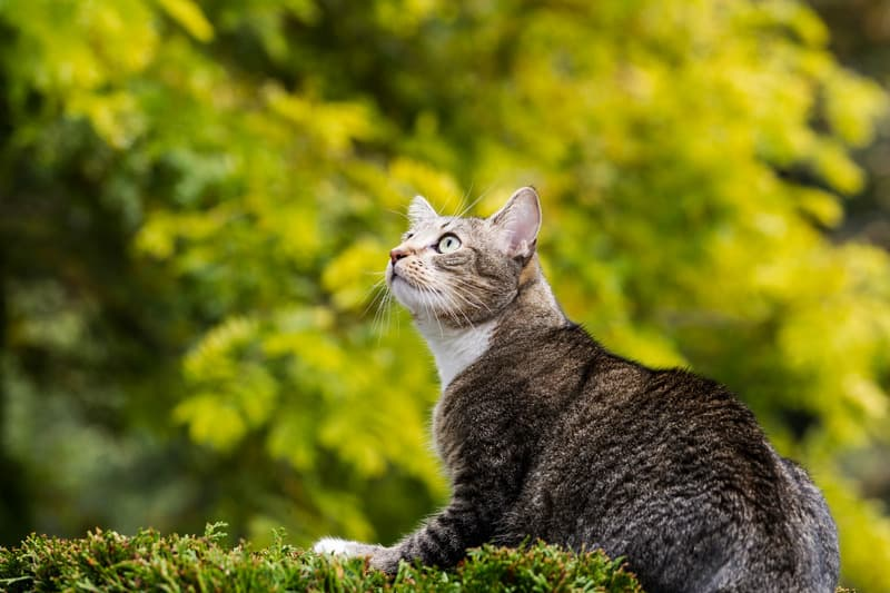 why cats are so curious