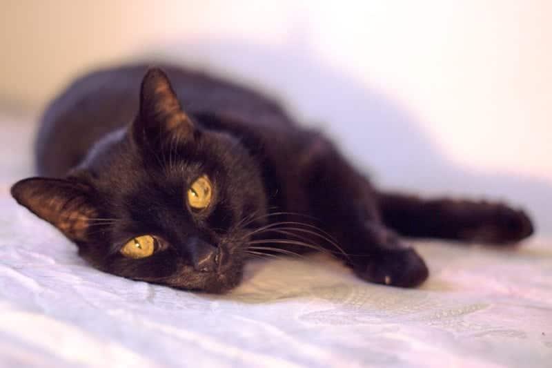 adopt a senior cat
