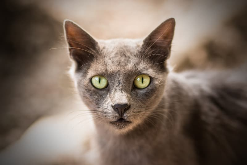cats and ancient egypt