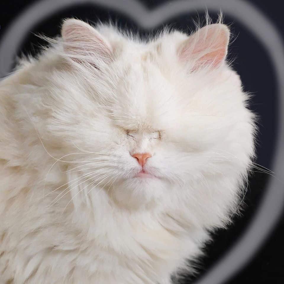 moet the blind cat