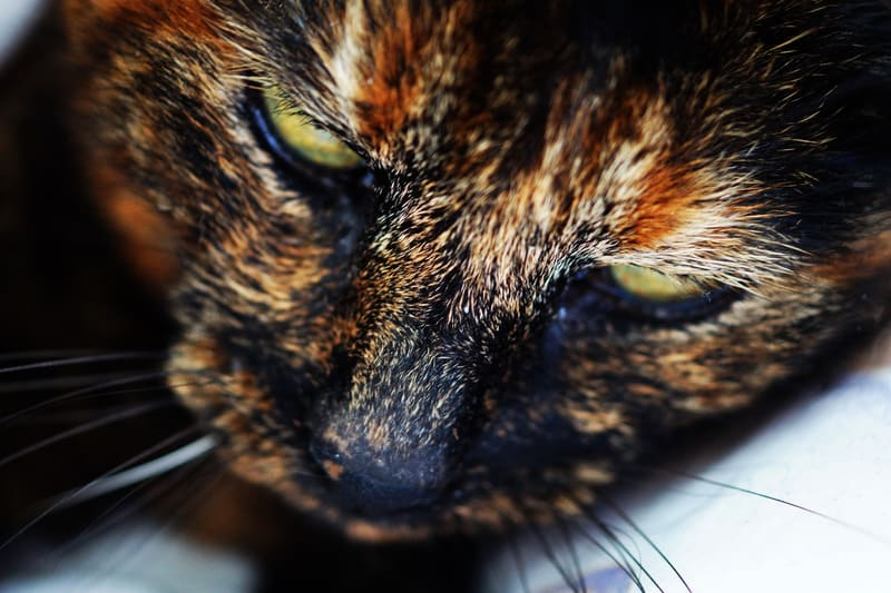 interesting facts about your cat's whiskers