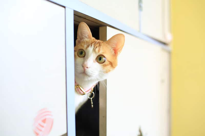 why cats like to hide