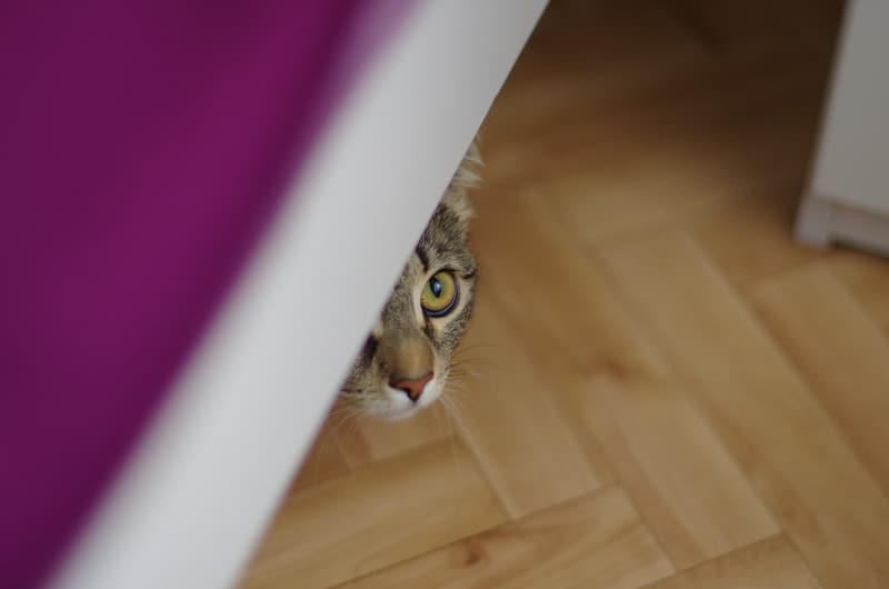 why do cats like to hide