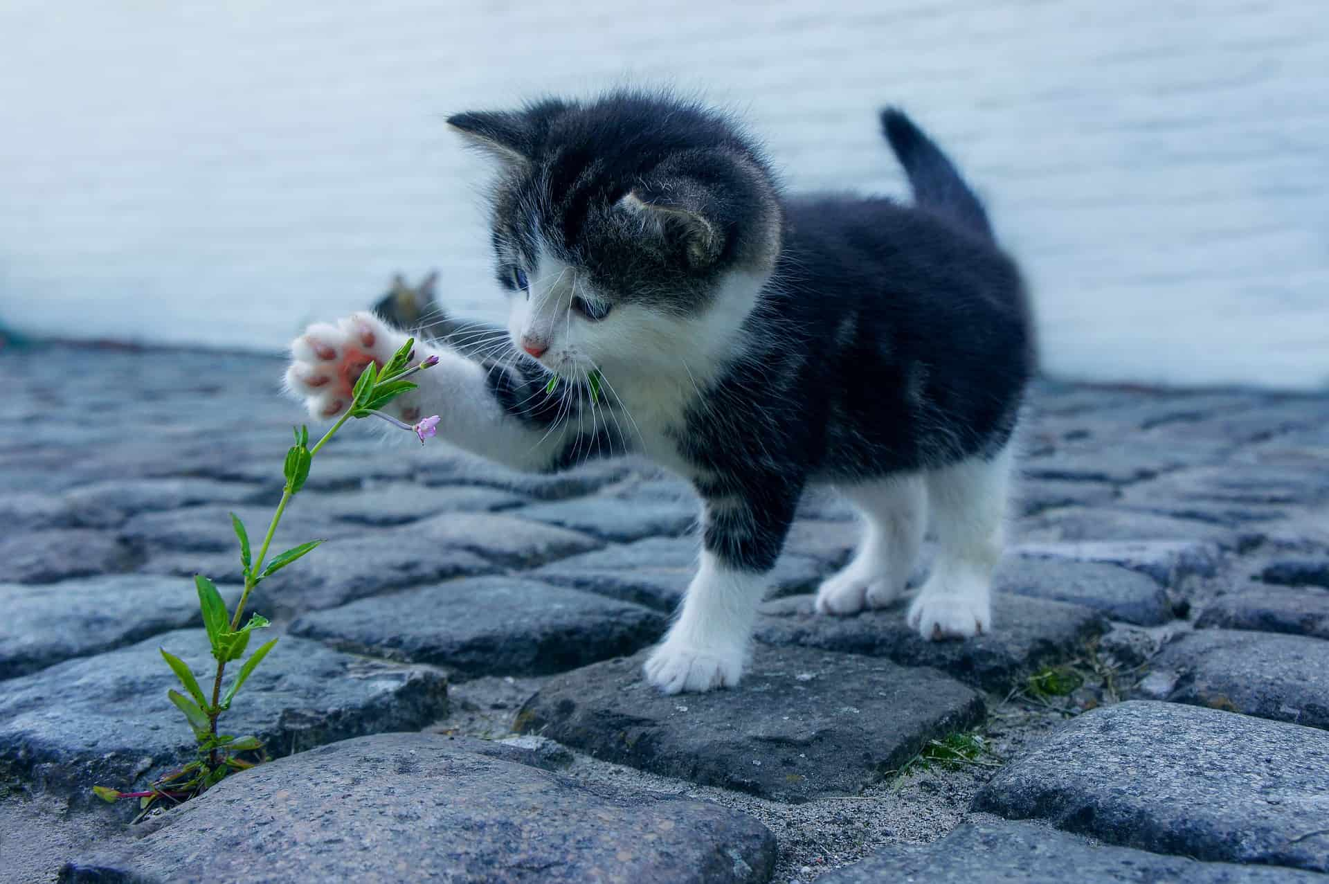 quotes about kittens