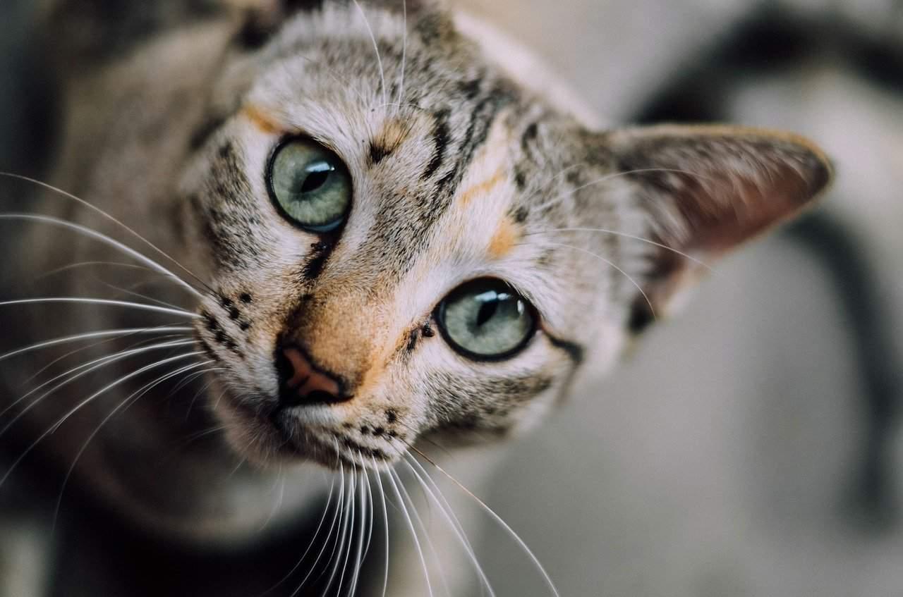 punish your cat