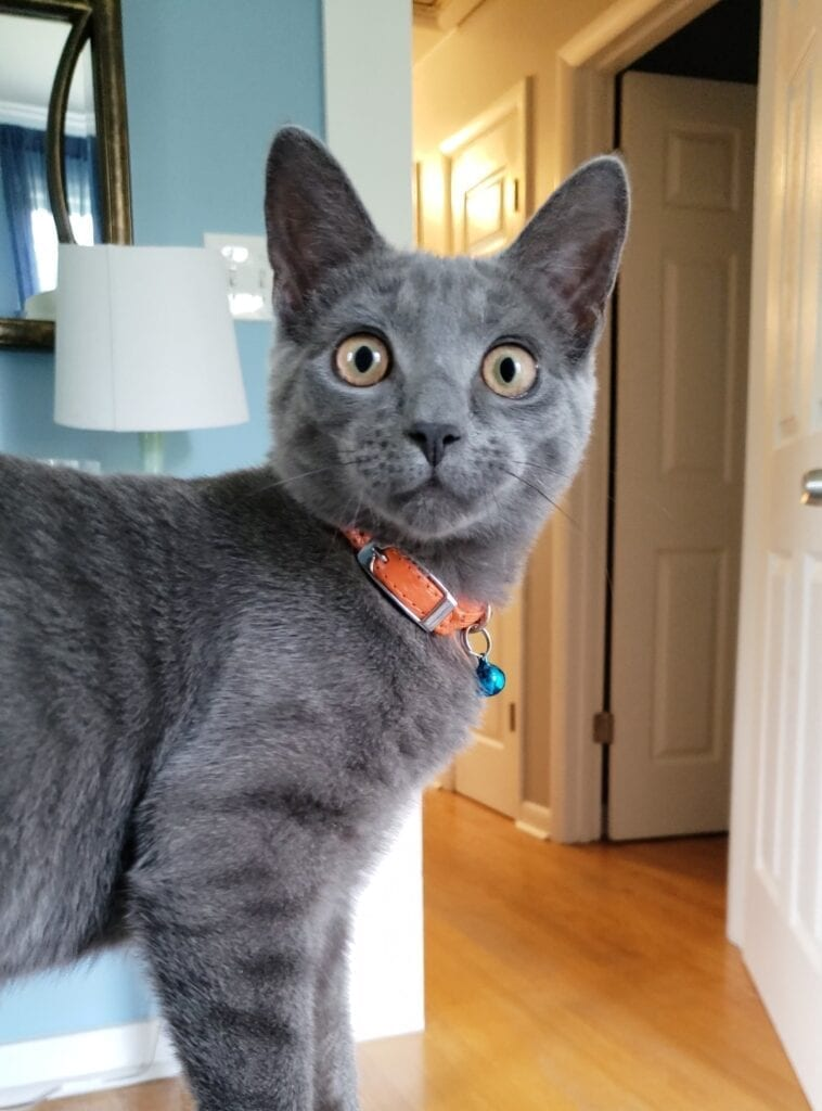 bell on your cats collar