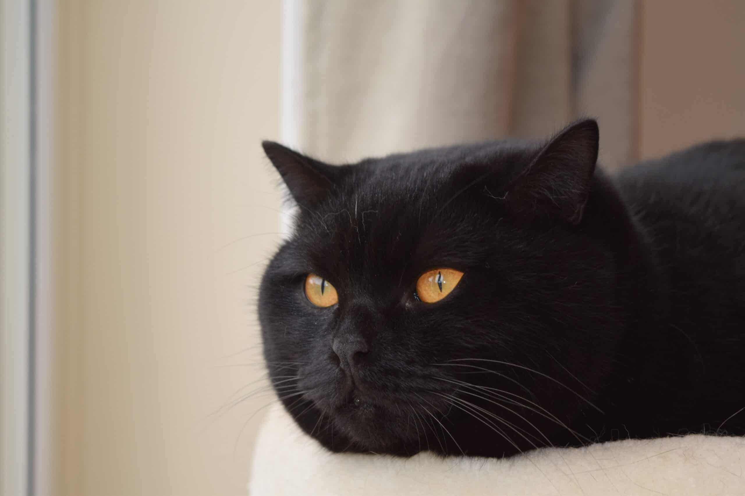 why do cats have a third eyelid?