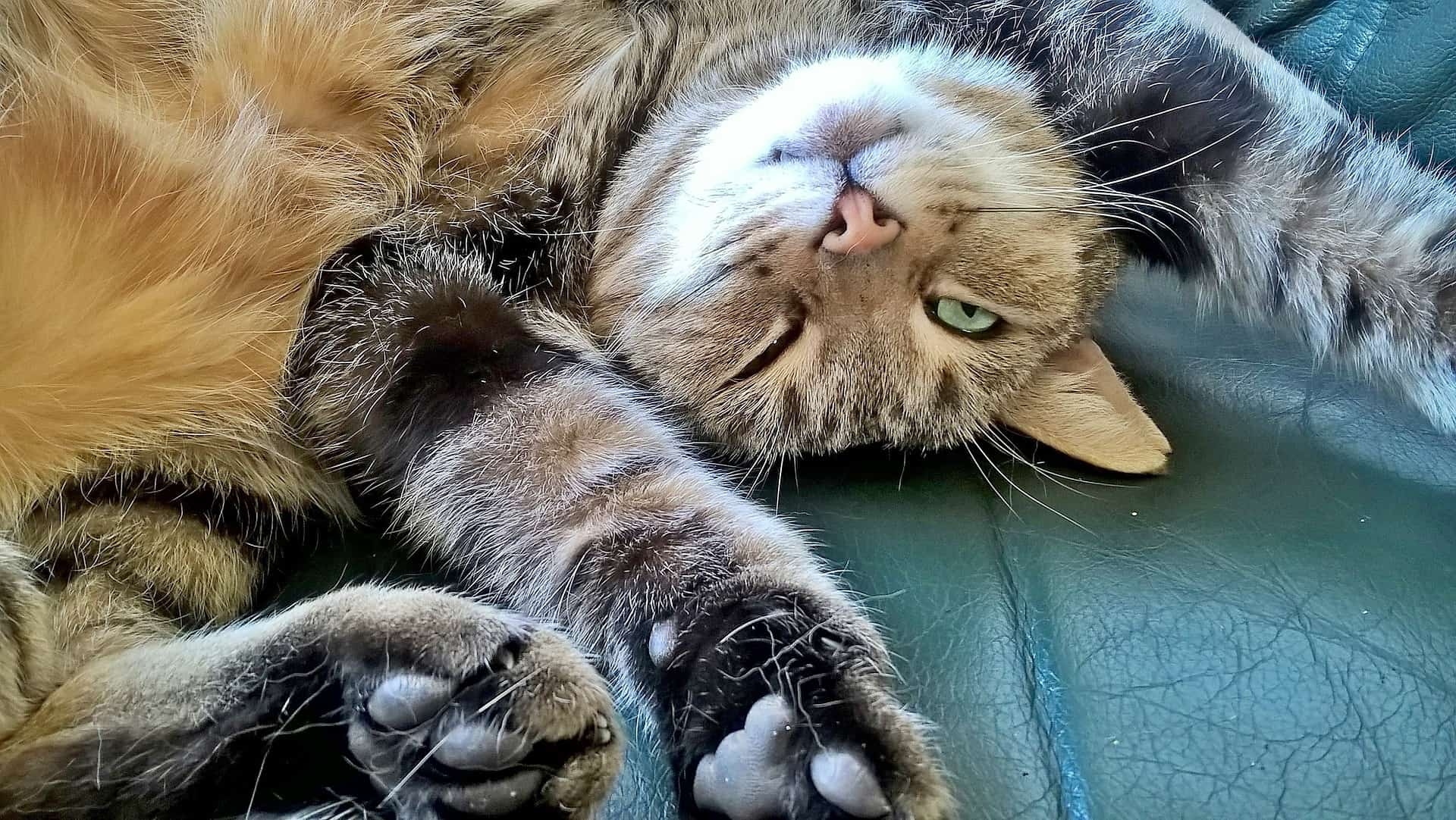 cute things cats do and why