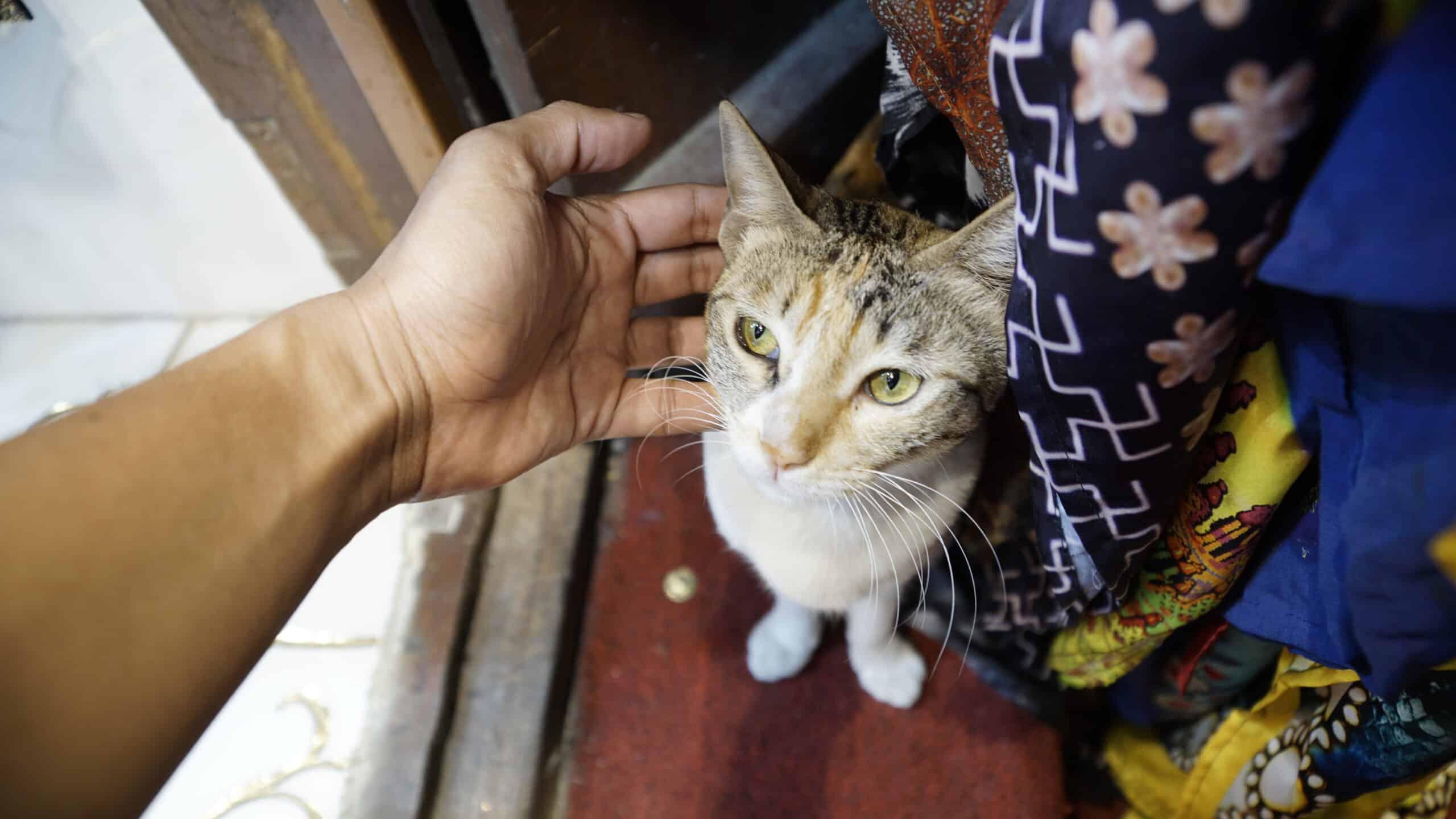 can cats sense bad people?