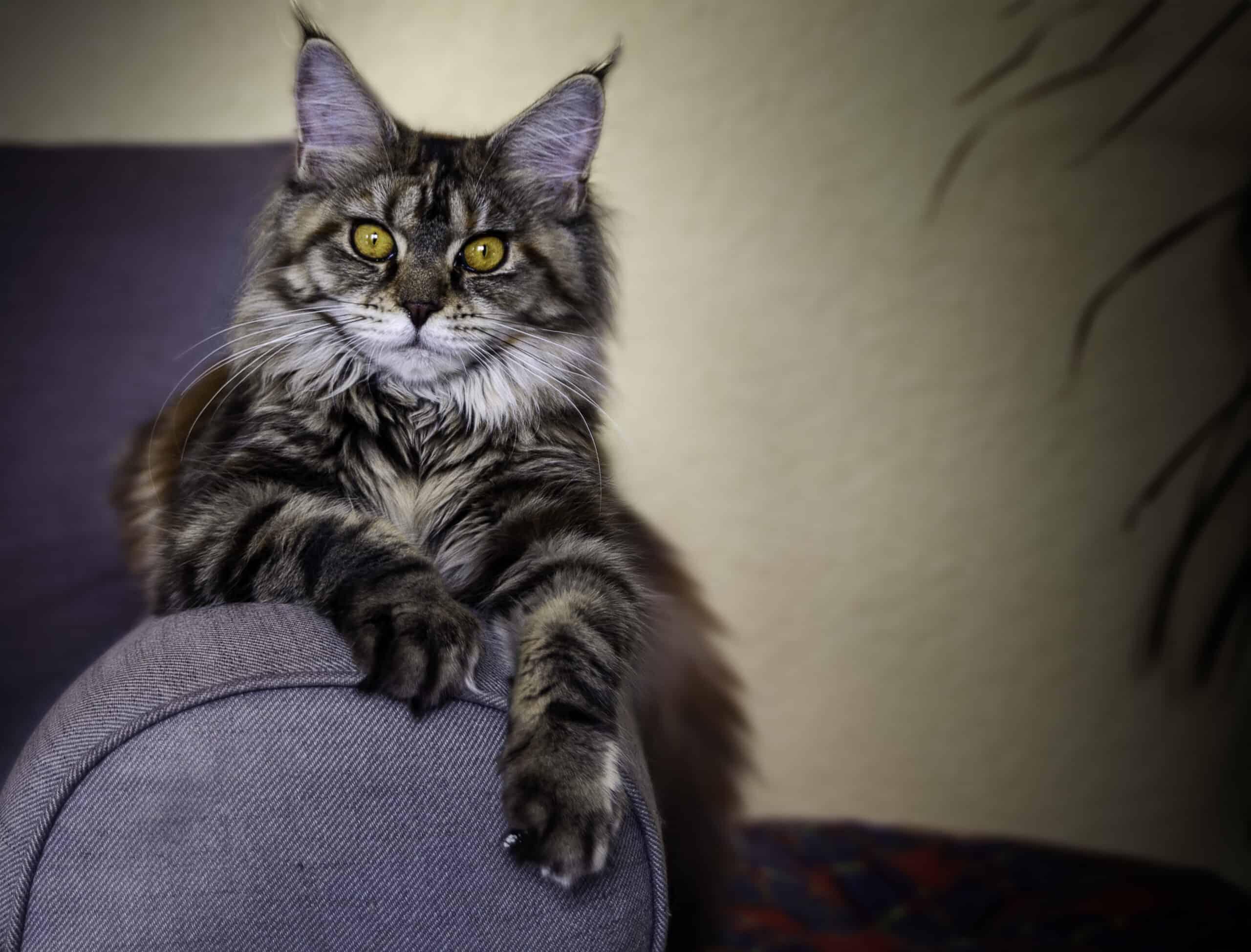 can cats sense good people