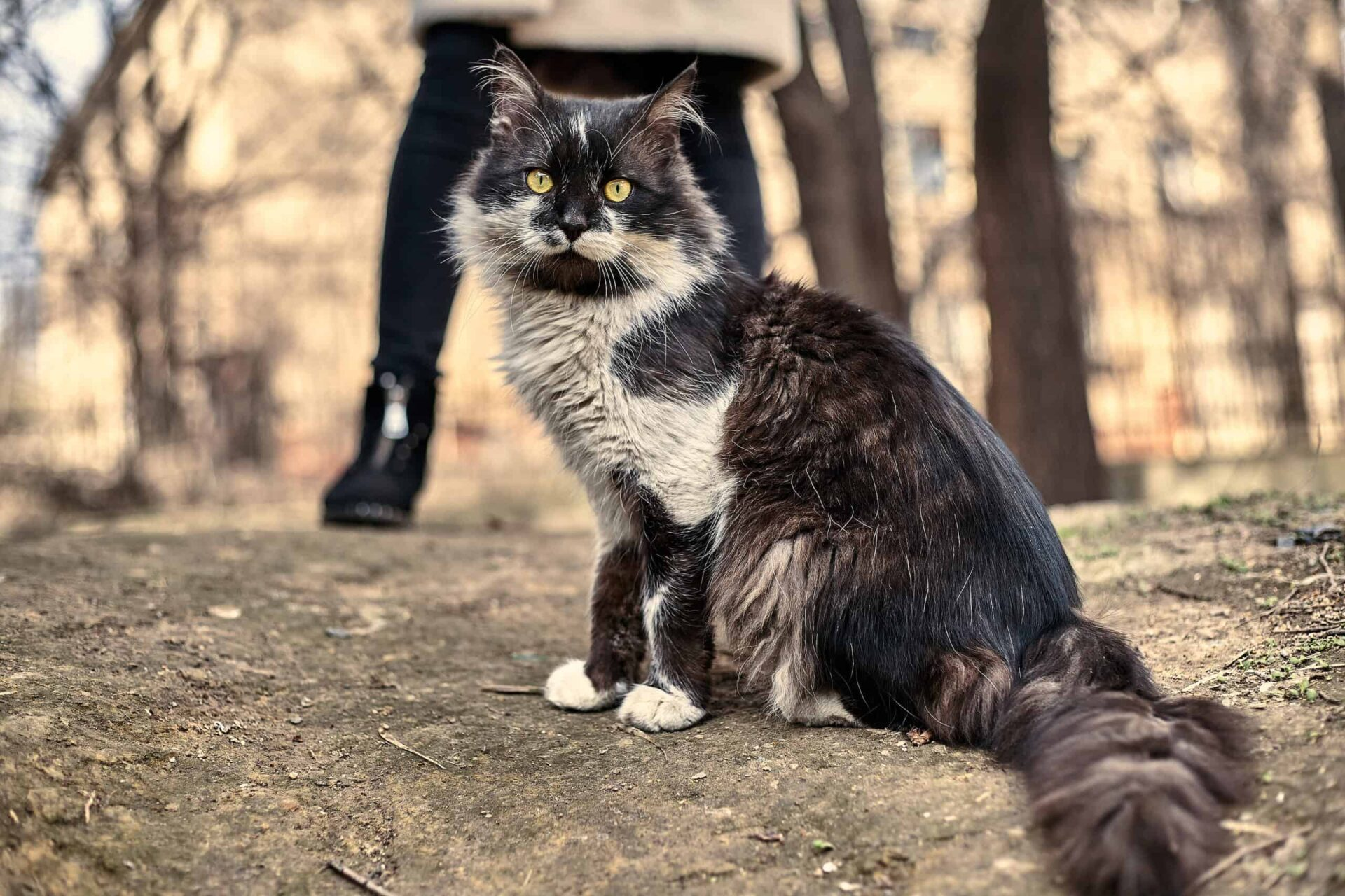 tips to care for feral cats