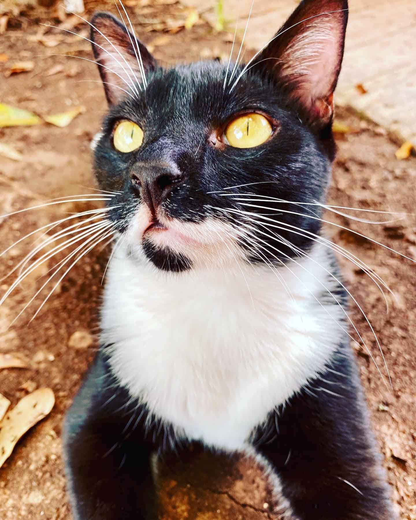 why do some cats have such long whiskers?