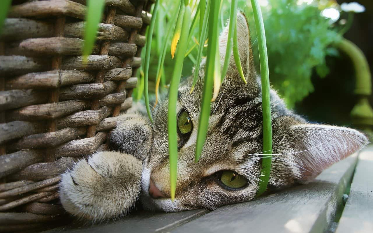 cats eat houseplants