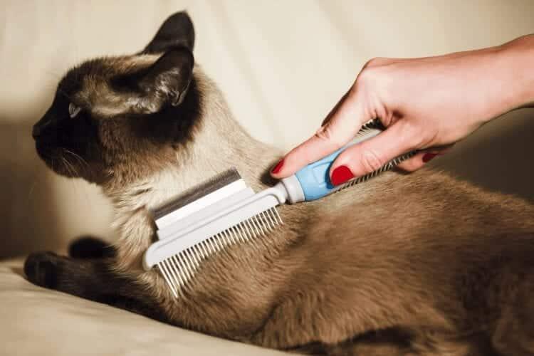 do I need to groom my cat