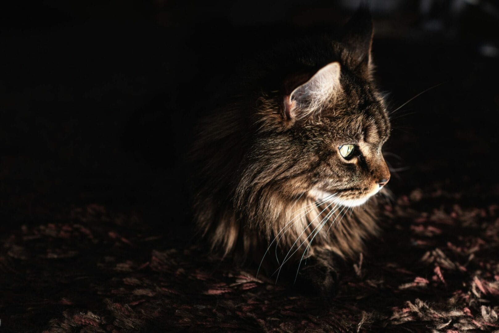 cats are crepuscular
