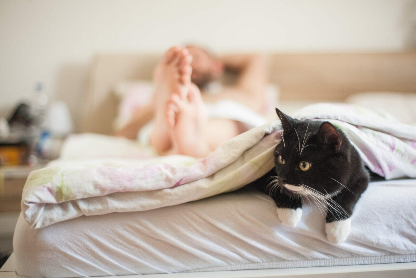 why do cats attack your feet under the covers