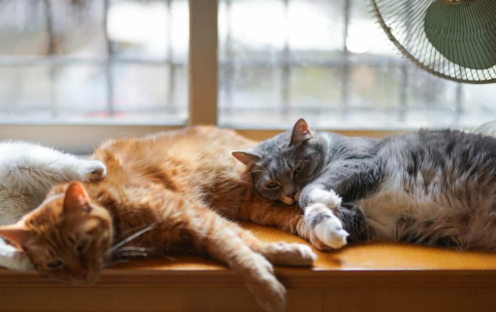 cats grieve