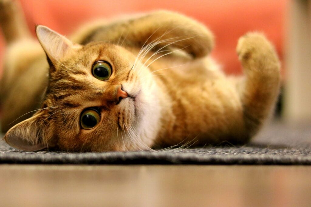 do cats miss their owners when they're gone?