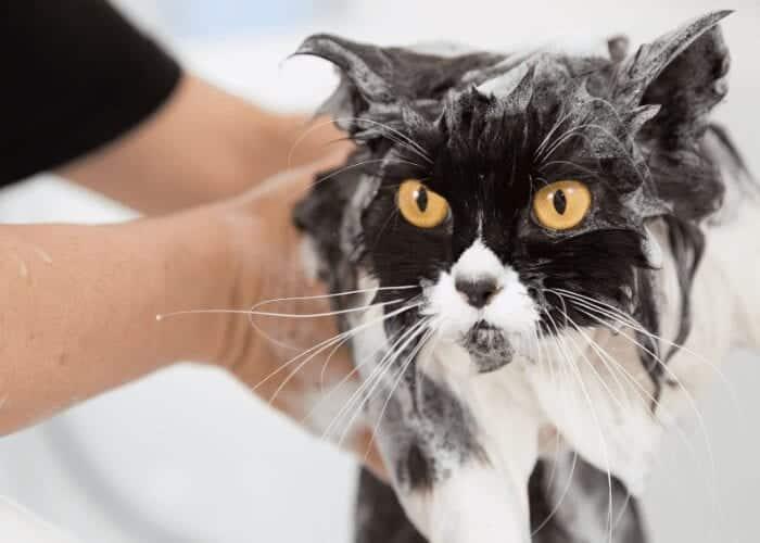 should I give my cat a bath?