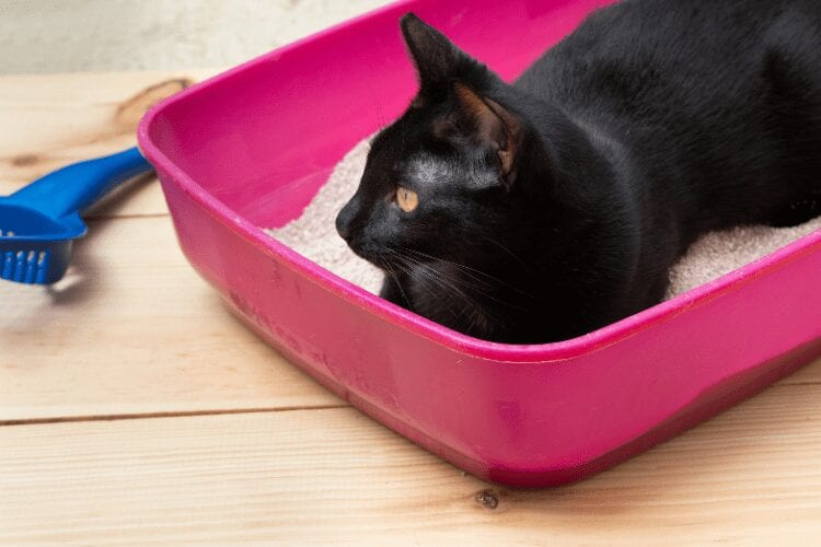 why do cats sleep in litter boxes?