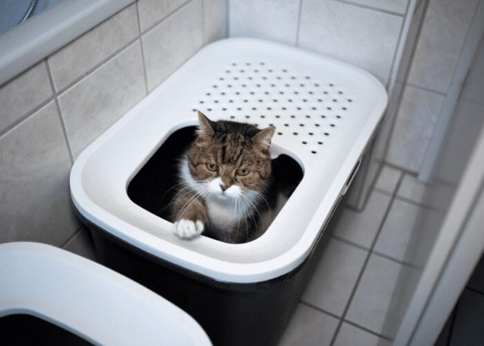 why is my cat so messy in their litter box?