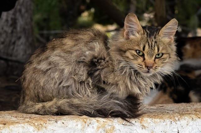 cat is depressed