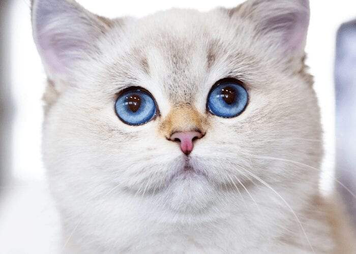 all about cat eye color