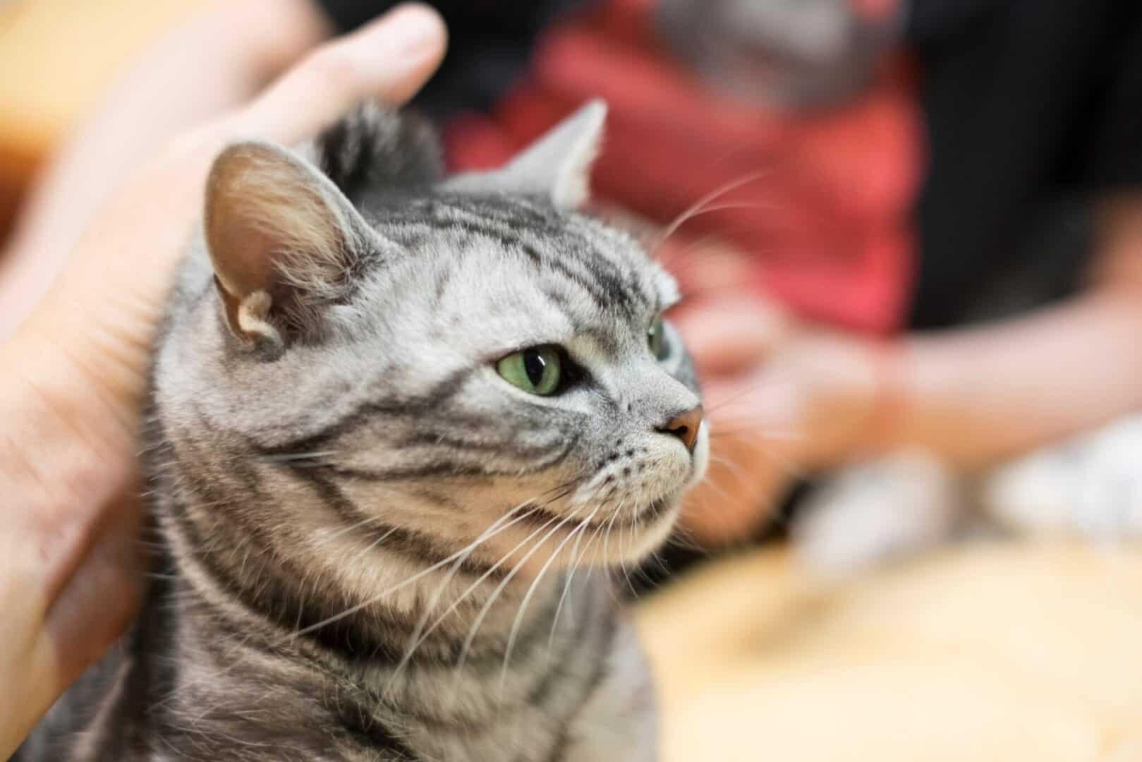scruff a cat